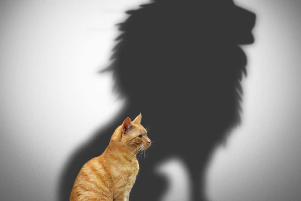 cat with the shadow of a lion