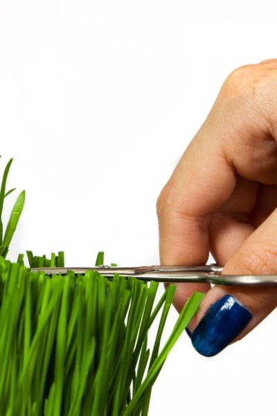 close up of hand cutting grass with scissors
